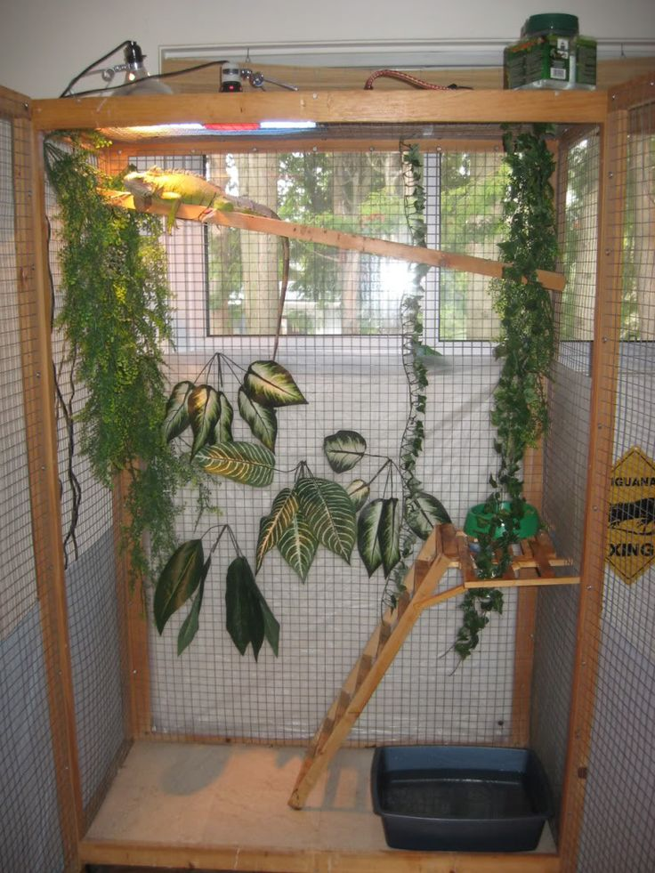 25 Best Ideas About Iguana Cage On Pinterest Snake