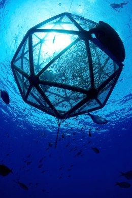 A mariculture company in Hawaii has invented a farming method that has near to zero environmental impact. By filling 100-ft. (30 m) copper-alloy mesh cages with fingerlings and letting them drift, tracked by GPS, in deepwater ocean, they make a safe place for the fish to grow, thus making a non energy wasting fish farm. In 2011 it tested 20-ft. (6 m) pens and collected twice as much fish as was expected. It is probably the most ecological farming possible.