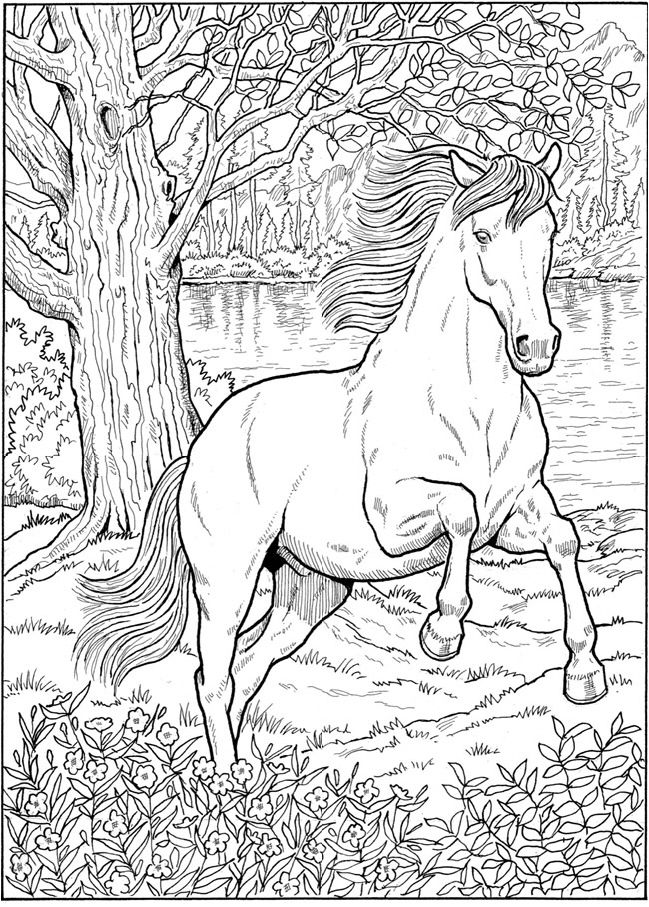 Pin By Wanda Twellman On Coloring Equids Horse Coloring Books Horse Coloring Pages Horse Coloring