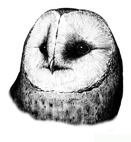 plomykowka