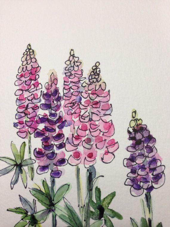 люпин цветок рисунок огороженная