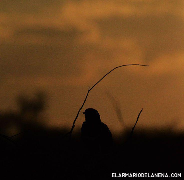 Samburu park - Kenya
