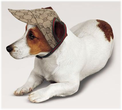 The Most Expensive Designer Dog Clothing: Gucci Baseball Cap