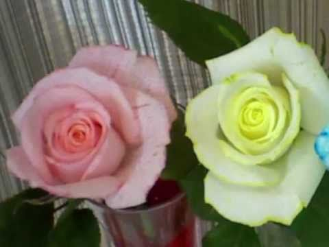 Video of Painting White Roses