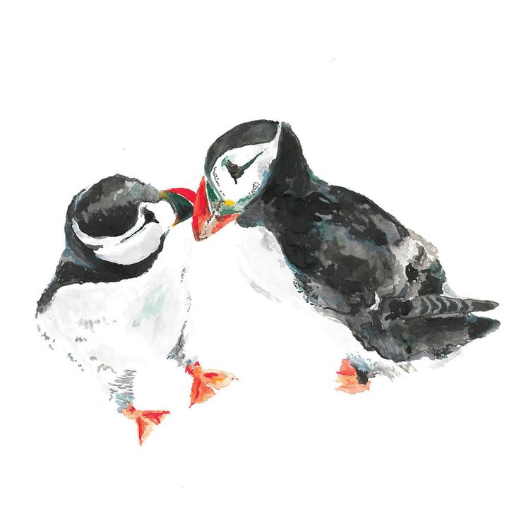 Square-Puffins-Cover.jpg