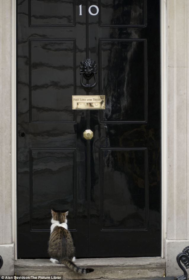 Larry waiting to be let in at 10 Downing Street, one of the most famous doors in the world. A former shelter cat, Larry is Chief Mouser for the PM and cabinet office.