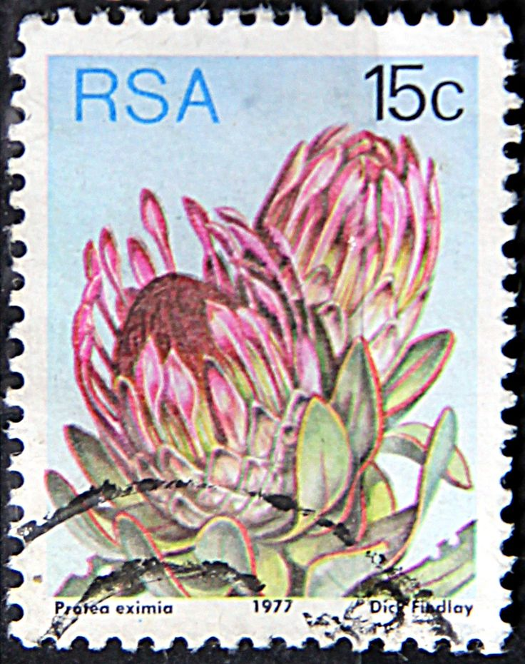 Republic of South Africa. PROTEA EXIMIA. Scott 485 A191, Issued 1977 May 27, Lithogravured, Perf. 12 1/2, 15c.