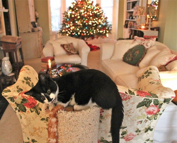Susan Branch's Living Room - I want that chair!: Tuxedos Cat, Branches Kitty, Branches Art, Branches Blog, Christmas Cheer, Susan Branches Christmas, Susan Branches Mary, Cat Fancy, Branches Mary Engelbreit