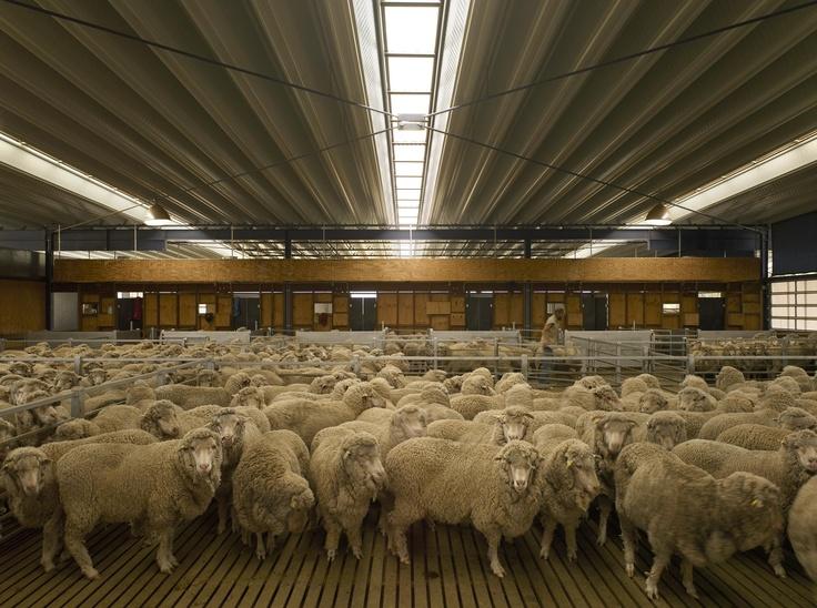 Wagga Wagga, Australia  Woolshed