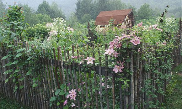 Give mea rustic garden any day over a nicely landscaped yard
