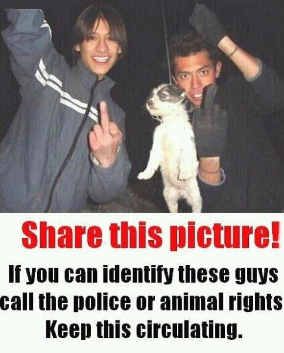 this photo makes me wanna cry , let's do something about it ! spread this photo around and let's stop animal abuse !