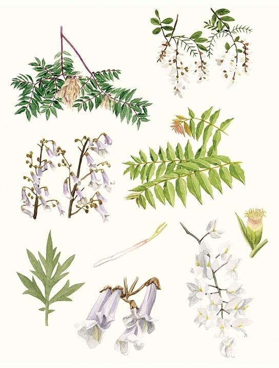 http://melindajosie.com #watercolor #illustration #plants
