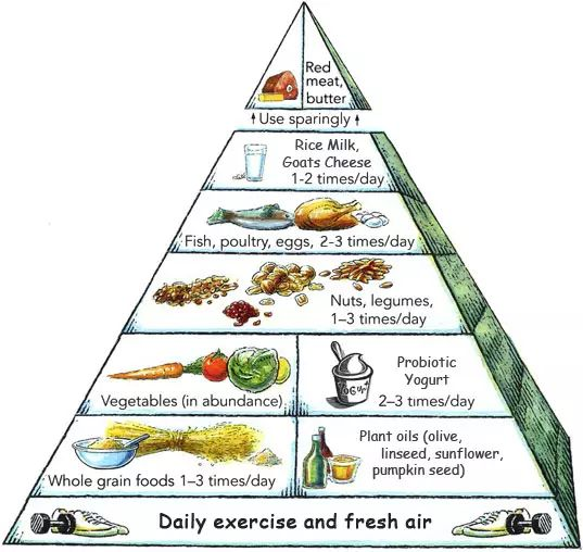 candida diet food pyramid picture