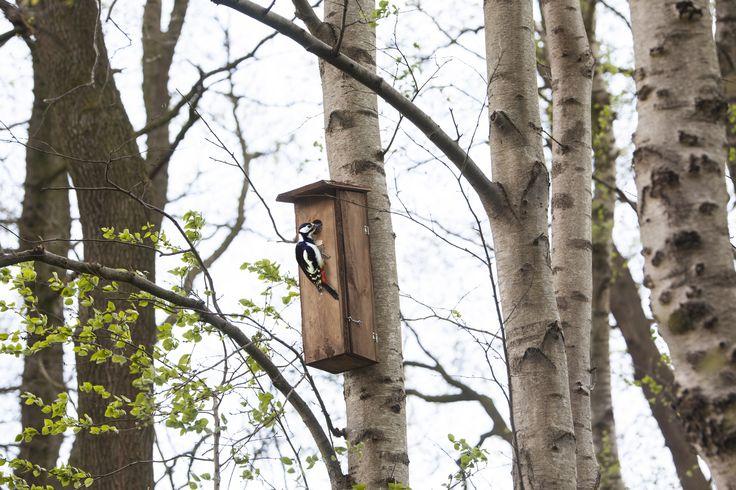 Harkálynak készült fenyőfa anyagú madárház, melynek belseje úgy van kialakítva, hogy a harkály számára megfelelő legyen a tojás rakás számára.