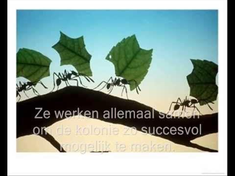 samenwerking bij mieren - YouTube