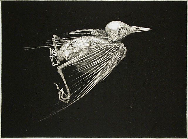 Arne Bendik Sjur. A Bird (black background, side view), 2003. Drypoint. Variation 1/1. 5-1/2 x 7-1/2 inches.