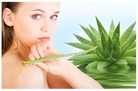 """Conoscete l'Aloe Vera? «Presso gli Antichi Egizi l'Aloe era considerata la """"pianta dell'immortalità"""" ed era diffusamente utilizzata, oltre che come cicatrizzante…»  Per conoscere tutte loe virtù dell'Aloe, leggi l'articolo: http://www.drgiorgini.it/index.php/approfondimenti/depurazione/le-virtu-dell-aloe-vera   #aloe #depurazione #depurare"""