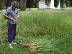 spinning flax | Harvesting and tying flax into bundles