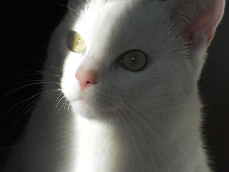 curious cat :)