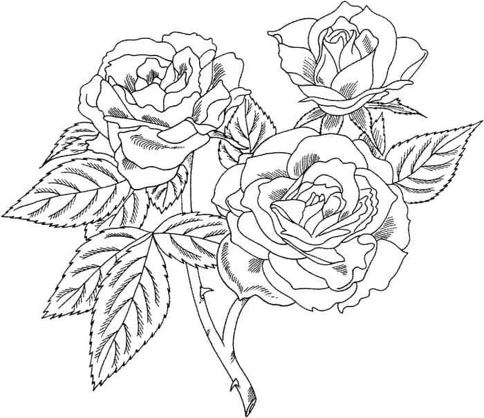 Hard Rose Coloring Pages In 2020 Rose Coloring Pages Flower Coloring Pages Coloring Pages For Grown Ups