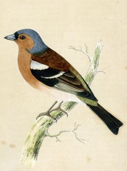 Birds always inspire me. I love vintage bird drawings and this little guys colors are delightful. Brown and blue feels so rich!