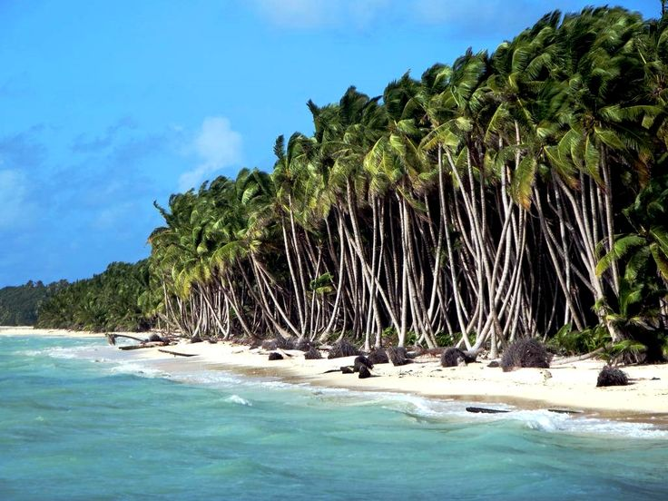 женщины кокосовые килинг острова фото меня тож был