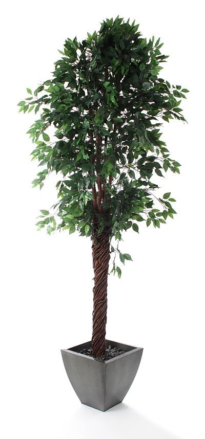 artificial 8ft ficus tree t068b from ficus - Ficus Trees