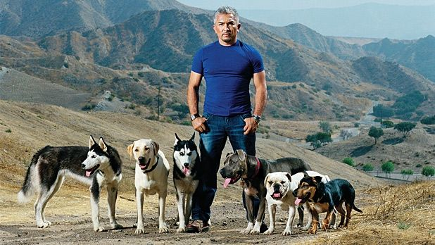 "Cesar Millan, Dog Whisperer (No More) good article from Men's Journal about the end of Dog Whisperer, divorce + financial problems, + Millan's new show ""Leader of the Pack"" + ""Cesar 911"""