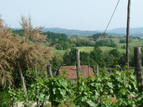 Wine and Ancestry in Slovenia