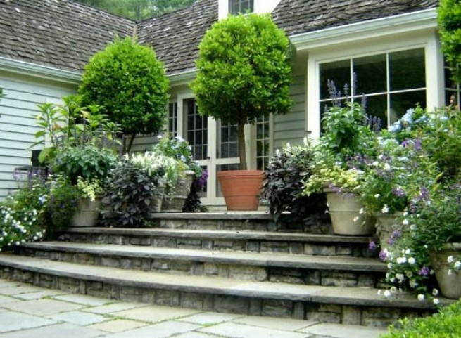 Potted Trees :) | Add On | Pinterest | Potted Trees, Gardens And
