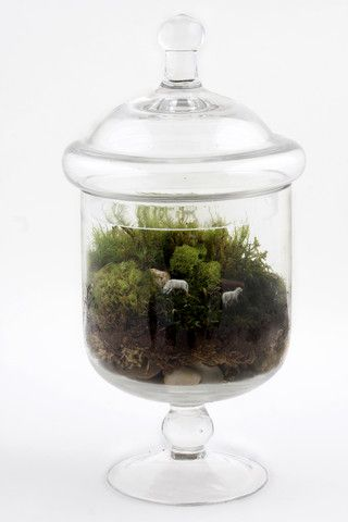 Grazed and Confused by Twig Terrariums. Grazed & Confused is a readymade terrarium, containing two sheep, wandering lonely as clouds across the great green expanse of an apothecary jar. Keep it next to your bed and gaze upon it as you fall asleep.  Sweet dreams! American Made. See the designer's work at the 2015 American Made Show, Washington DC. January 16-19, 2015. americanmadeshow.com #terrarium, #sheep, #americanmade