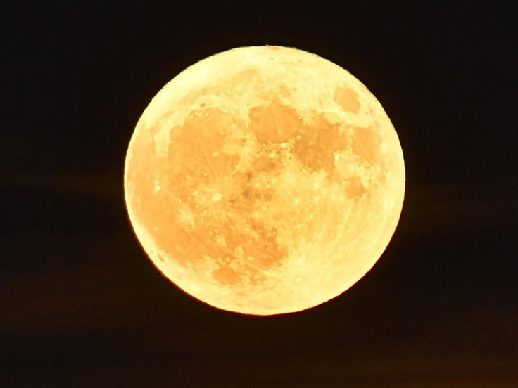 The 'Supermoon' rises on November 14, 2016 in Vertou, western France. Picture: AFP PHOTO / LOIC VENANCE