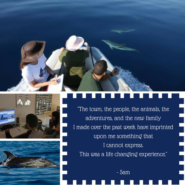 Dolphin research project in Greece