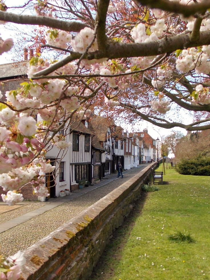 Blossom in Church Street, Rye, East Sussex, England by B Lowe