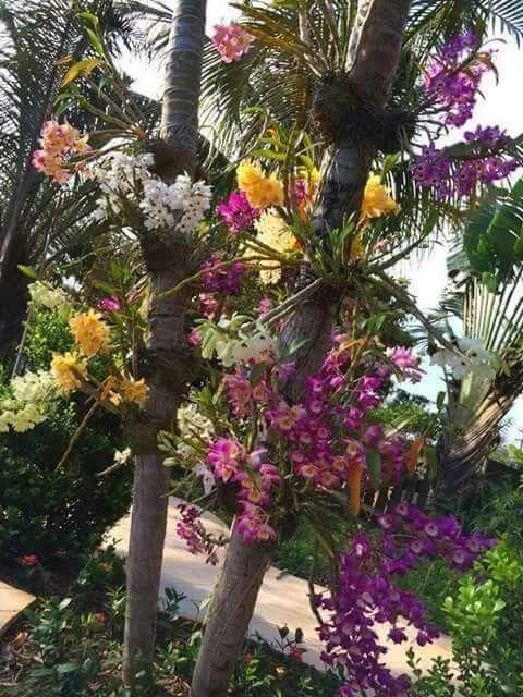 Orquídeas sempre lindas.