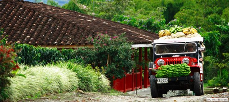 Eje+Cafetero+Flores | ... verde y montañoso lleno de orquídeas y flores de todos los colores