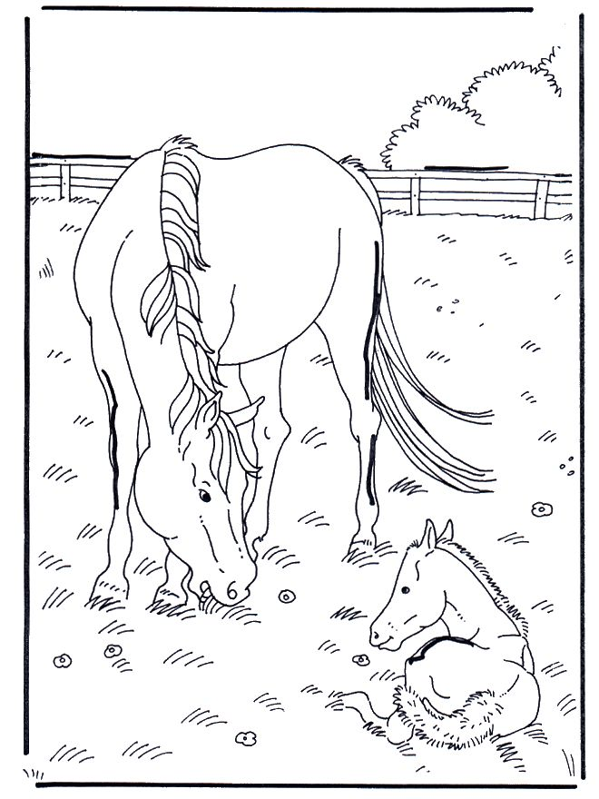 Horse and foal Baby fun Horse coloring pages, Color i