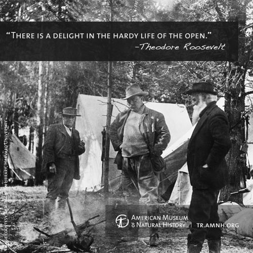 Women Arena Quotes: 25+ Best Ideas About Theodore Roosevelt On Pinterest