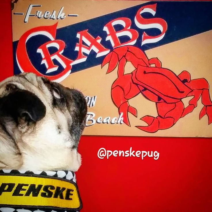"""Get out your napkins and melt some butter because today is """"National Crabmeat Day"""".Go for a walk to your local seafood vendor and celebrate with your favorite crab recipe. Don't be crabby- just eat one! Enjoy your dinner from Chef @penskepug  #nationalcrabmeatday #crabmeatday #crabmeat #crabs #crabclaws #crablegs #crabcakes #jumbolump #backfin #clawfingers #cocktailfingers #crabsalad #crabby #snowcrab #snowcrablegs #dungenesscrab #dungenesscrablegs #kingcrab #kingcrablegs #bluecrab…"""