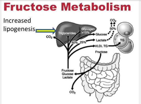 Fructose Metabolism By: Dr. Jason Fung | Dr. Jason Fung | Jason fung, Dr jason fung, Metabolic ...