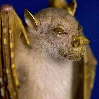 mysterious-bat-yoda