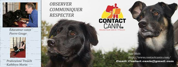 Contact canin R +
