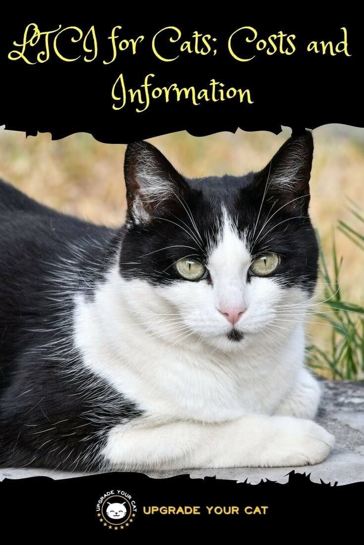 Ltci For Cats Cost And Information Upgrade Your Cat Cats Cat Lovers Cat Behavior