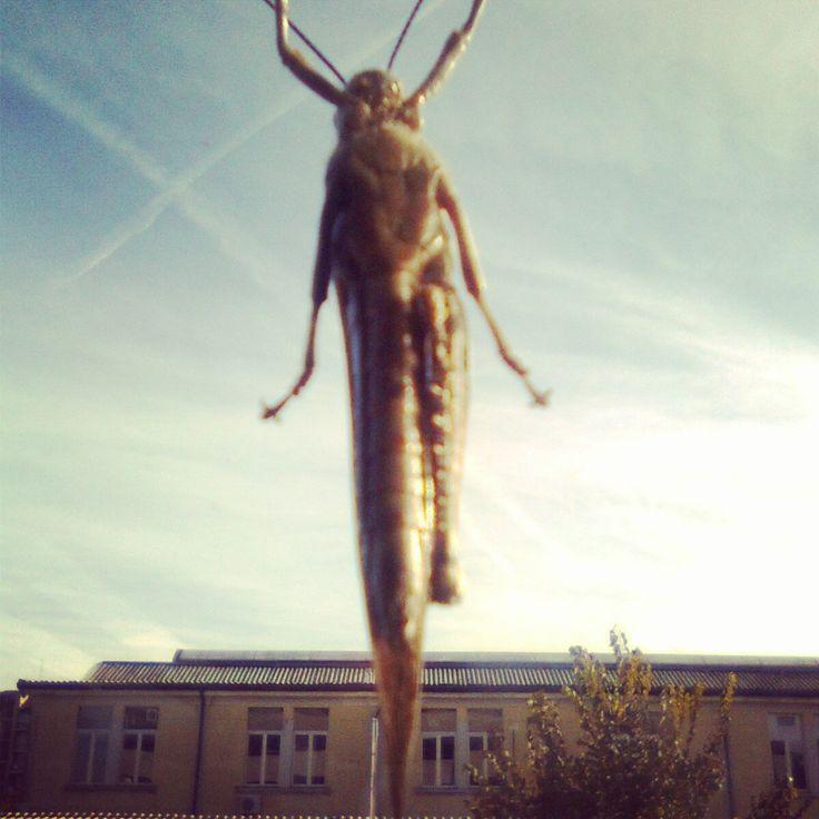 strange creatures_Ndyka Bo