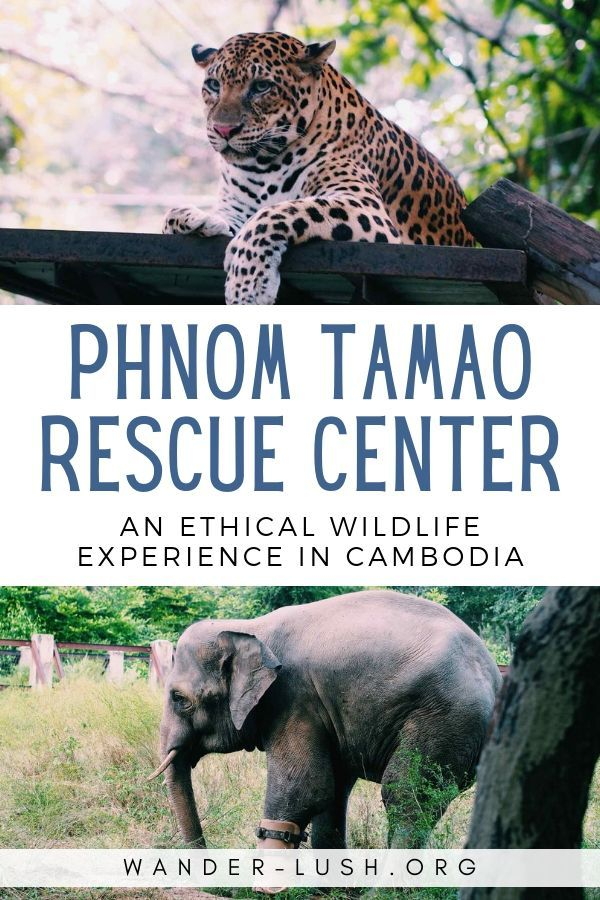 Phnom Tamao Wildlife Rescue Center Where Every Animal Has A Story Wildlife Wildlife Tourism Wildlife Adventure