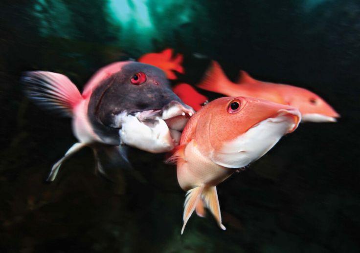 Pin by Sydney Cucchiara on Marine Science | Kelp forest ...
