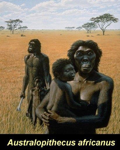 """Australopithecus africanus. 2.6 million years ago. """"Nosotros tendremos aún que esperar otros 800 millones de años para surgir como especie en la Tierra"""". Si Adan y Eva existieron, surgirían hace unos 1.800 millones de años."""