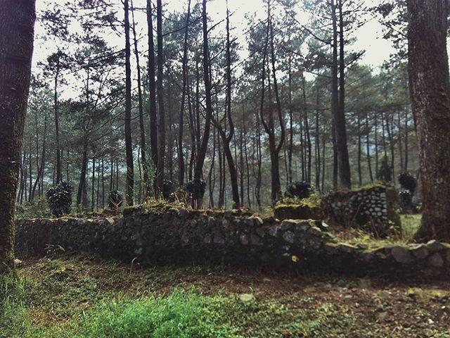 #pepohonan #pohon #trees #flora #nature #hiking #hikingjabar #puntang #gunungpuntang #cimaung #jawabarat #indonesia