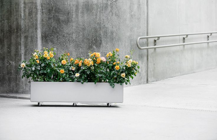 Enkle plantekasser i stål fra norske BEDD gir en vakker og varig løsning for balkong, terrasse og hage. Noen modeller kan leveres med bunn og hjul.