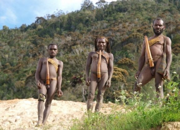 Dani men dressed in penis gourds, near Yiwika, Baliem Valley, Irian Jaya, Papua New Guinea, Indonesia, Southeast Asia, Asia. Many tribes there can be recognized from the way they use koteka. Short Koteka used at work, and the lengthy decorations used in ceremony.